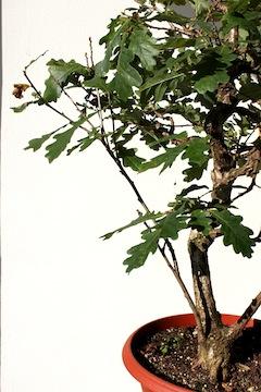 Poda de hojas