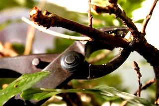 poda de formación bonsai