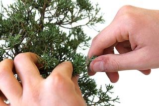 Sacar un pino de su lugar
