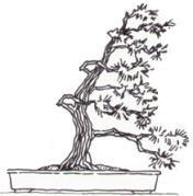 Estilo Bonsái Fukinagashi, barrido por el viento, creciendo en una dirección