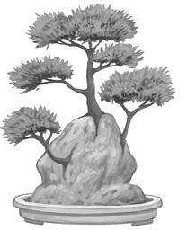 Estilo Bonsái Ishisuki, enraizado en Roca