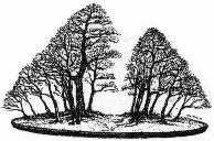 Estilo Bonsái Yose-Ue, bosque o formación de grupo