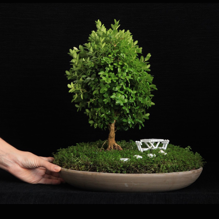 Miniature garden with a boxwood