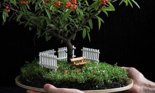 Jardines de Bonsái en Miniatura